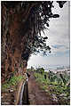 Monte - Funchal